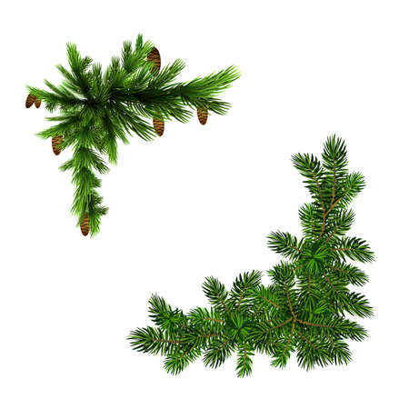 Two green spruce branches realistic. Christmas vector illustration Ilustracja