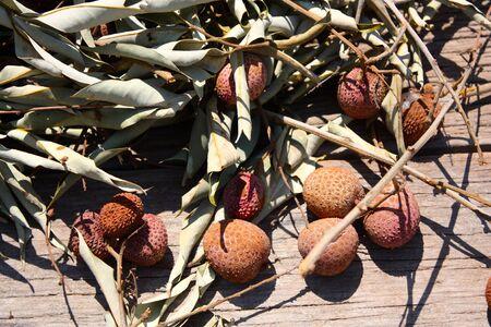 planck: lychees
