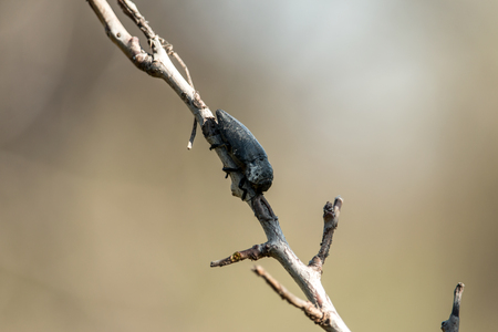 A bark beetle is one of about 220 genera with 6,000 species of beetles in the subfamily Scolytinae.