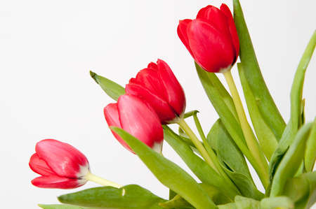 bouqet: bouqet of red tulips isolated on white Stock Photo