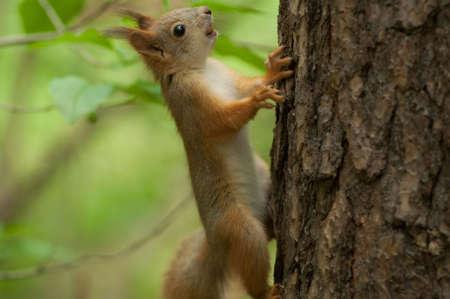 brown squirrel eating nuts on tree