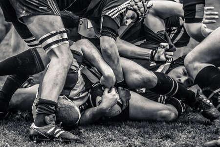 pelota rugby: atletas luchan por el bal�n en el partido de rugby