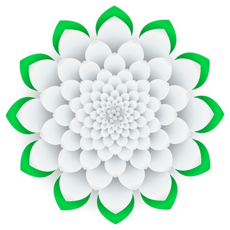 Background beautiful white flower on white background. photo