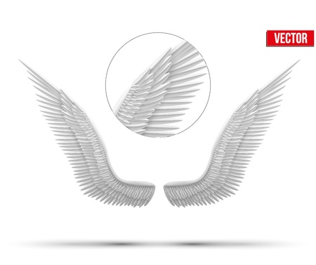 gabriel: White open angel wings  Vector Illustration isolated on white background
