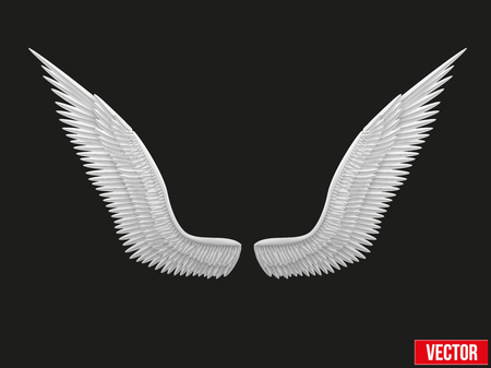 mikhail: White open angel wings  Vector Illustration isolated on black background