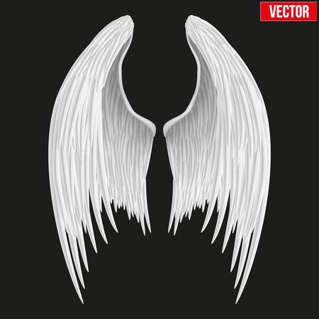 mid air: Blanco pliega las alas del �ngel. Ilustraci�n del vector aislado en el fondo blanco.