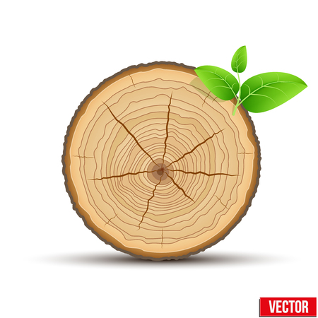 tree cross section: Wood Cross section of tree trunk with green leaves. Vector Illustration isolated on white background Illustration