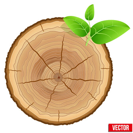 tree cross section: Annual tree growth rings of the cross-section of a tree trunk with green leaves.