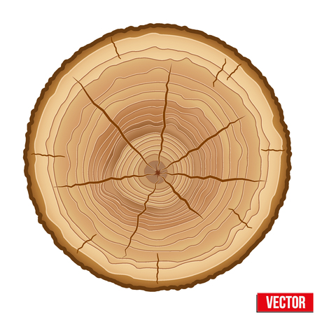 tree cross section: Annual tree growth rings of the cross-section of a tree trunk.
