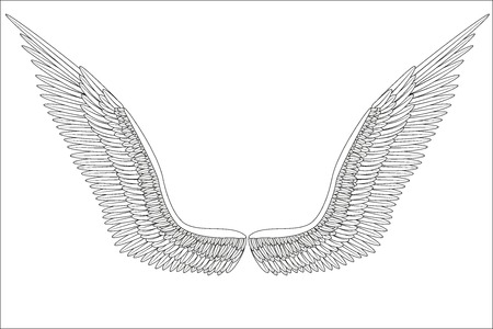 Sketch open angel wings. Vector Illustration isolated on white background. Иллюстрация