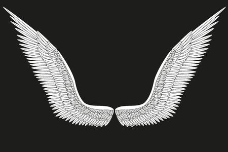 wings angel: Sketch bianca aperta ali di angelo Illustrazione isolato su sfondo nero.