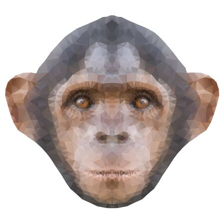 primacy: Head of a monkey in triangle style. Symbol of new 2016 year. Triangulation trend Vector Illustration isolated on white background