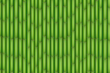 japones bambu: Fondo de bambú verde. Ilustración aislada en el fondo blanco.