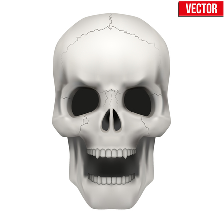 open mouth: Vector Human skull with open mouth. Illustration isolated on white background