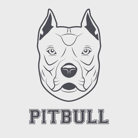 bull dog: Pitbull mascot head. Symbol of dog. illustration isolated on white background.