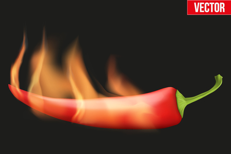 capsaicin: Classic red chili peppers with flame. Spicy menu. Vector Illustration isolated on background. Illustration