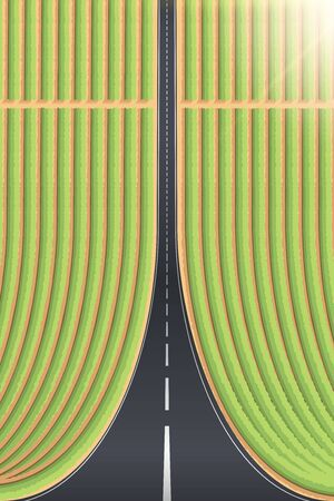 Droneception Road Landscape with planted fields or vineyard. View on highway and plantations from above. Creative Concept of Droneception Effect. Vector Illustration.