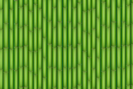 Green Bamboo texture. Bamboo plants tightly lined up. Vector Illustration