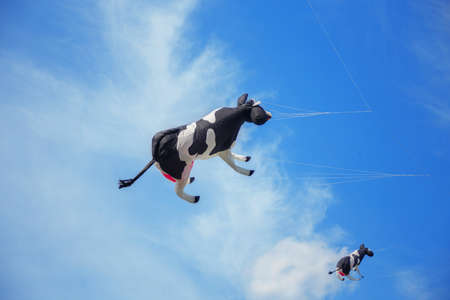 group of black white air cow kites flying high in the sky. Kite festival Stock Photo