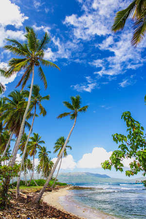 Tropical beach landscape. Samana, Dominican Republic