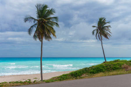 Caribbean landscape. Two palm trees on a background of azure sea and the grey rainy sky. Dominican Republic Stock Photo