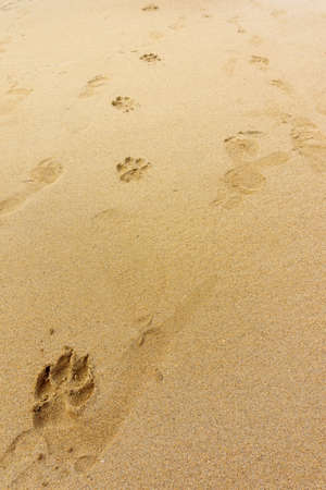 footprints or traces of dog paws on the sand