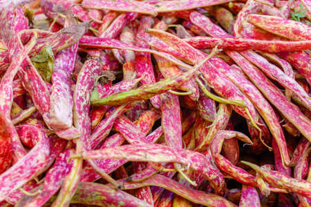 fresh red pink string beans on the market, natural background Stock Photo