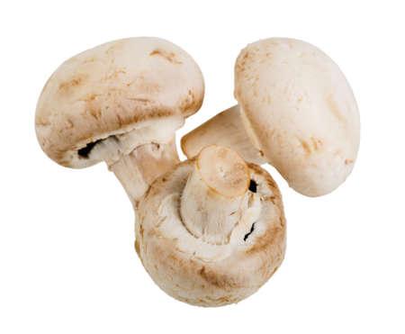 three whole fresh mushroom champignon isolated on white background 스톡 콘텐츠