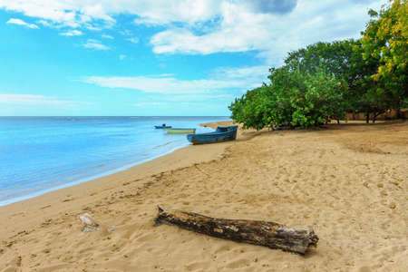 wooden boats on the beach with green plants and log, fishermens point