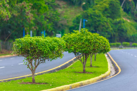 strip with green trees and grass on paved road