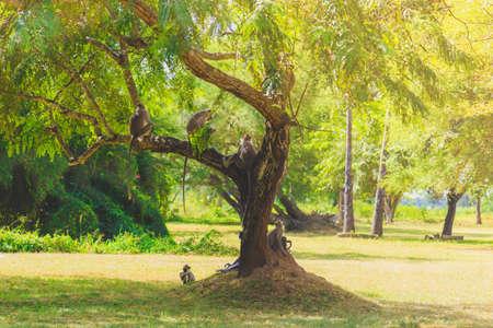 Monos sentados en un árbol en la selva Foto de archivo - 99215227