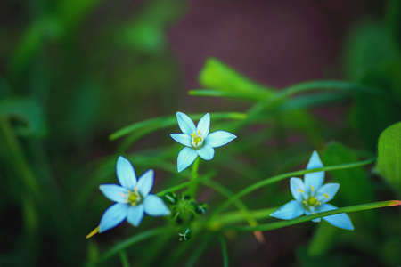 blue delicate flowers in green foliage in Botanical garden, floral background