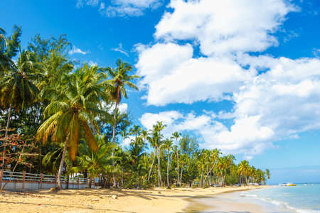 Caribbean tropiocal beach with high palm trees and bright blue sky