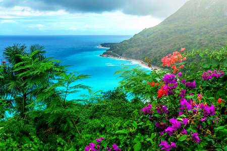 paradise vacation, delightful Caribbean landscape, green mountains, bright flowers and turquoise sea