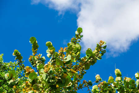Tropical tree with green leaves and blue sky, natural background