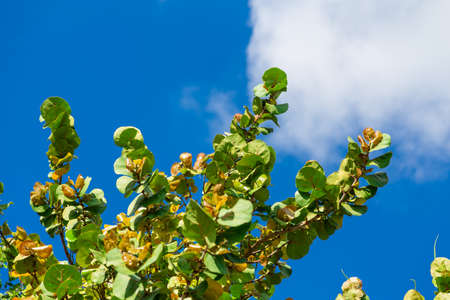 Tropical tree with green leaves and blue sky, natural background Foto de archivo