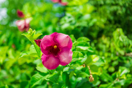 Beautiful blooming pink flower in green garden, natural floral pattern Reklamní fotografie