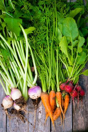 Een groep verse wortelgroenten. Stockfoto