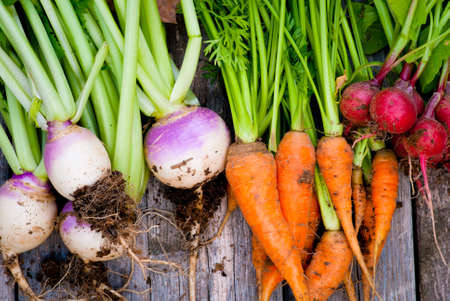 A group of fresh root vegetables. Stok Fotoğraf