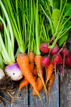 dirt: A group of fresh root vegetables. Stock Photo