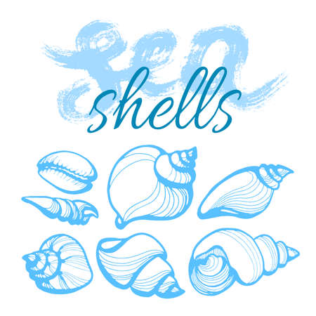 Set with the seashells and words on white background. Lettering. Handwritten illustration for t-shirt design, poster, web design, print