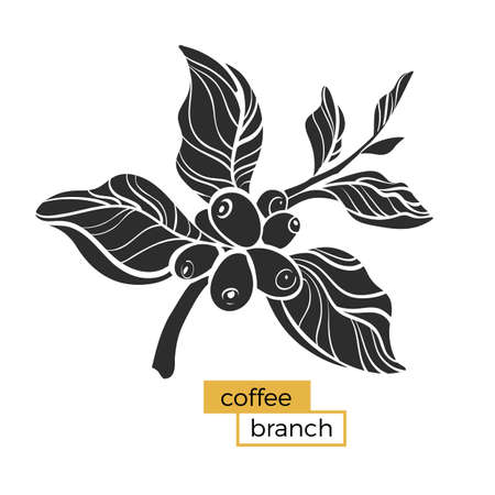 Black branch of coffee tree with leaves and natural coffee beans. Silhouette, shape. Botanical illustration. Vector symbol isolated on white background eps.10 Illustration
