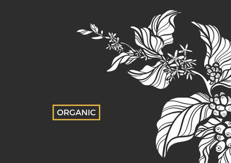White branch of coffee tree with leaves, flowers and natural coffee beans. Organic product. Silhouette, shape. Botanical illustration. Vector isolated on black background eps.10 Illustration