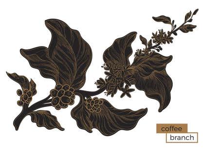 Zwarte tak van koffieboom met bladeren en natuurlijke koffiebonen. Gouden araing. Biologisch product. Silhouet, vorm. Botanische illustratie. Vector op witte achtergrond eps 10 wordt geïsoleerd die