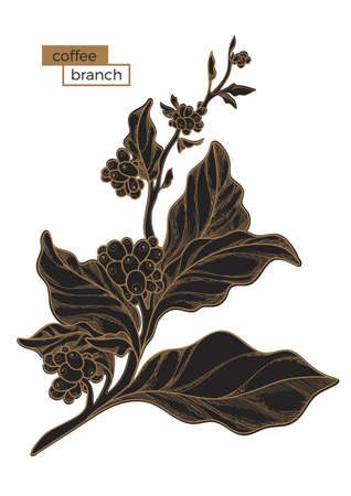 Black branch of coffee tree with leaves and natural coffee beans. Illustration