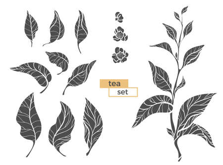 Set of tea bush branches with leaves and flowers on white background. Realistic. Organic product. Vector black silhouette isolated on white background and grouped for easy editing eps.10 Ilustracja