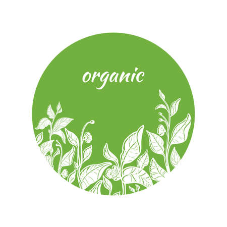 Trendy template with fresh green tea branches in circle. Natural leaves and flowers. Design. Copy space. Vector illustration Eps.10