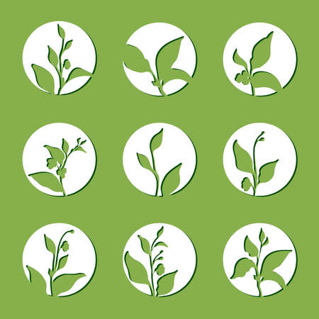 Set of tea bush branches with leaves and flowers in circle. Vector white symbol on green background. Realistic. Organic product. Silhouette isolated and grouped for easy editing eps.10