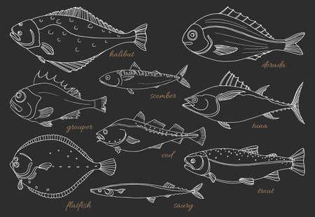 Set van zeevis op zwarte achtergrond. Baars, kabeljauw, makreel, bot, saira, tonijn, dorado, heilbot, forel vector doodle illustratie