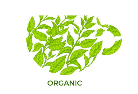 Symbol of cup with fresh green tea branches. Natural leaves and flowers on white background. Design. Copy space. Vector illustration Eps.10